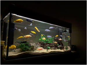 What You Need To Know About Aquariums