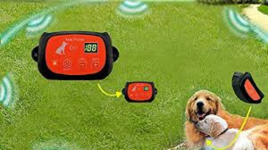 Everything You Should Know About Wireless Dog Fences
