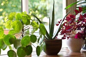 Science-Backed Benefits of Growing Indoor Plants