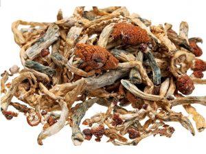 Why Choose Dried Magic Mushrooms